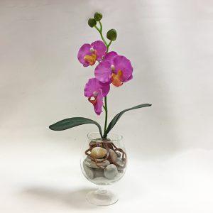 Орхидея мини в Бренди